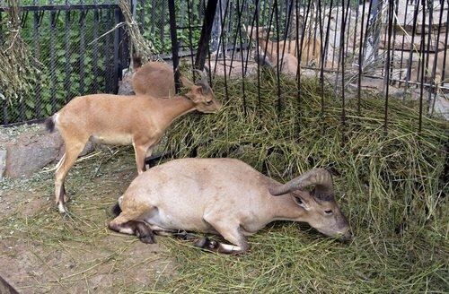 Обед в зоопарке
