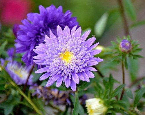 АСТРАльный цветок