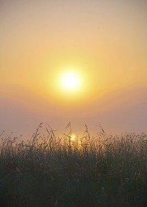 Поднималось солнце из тумана.