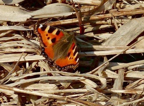 Первая бабочка в марте