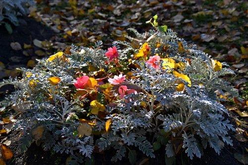 Осень украсила по-своему