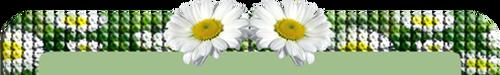 цветики степные
