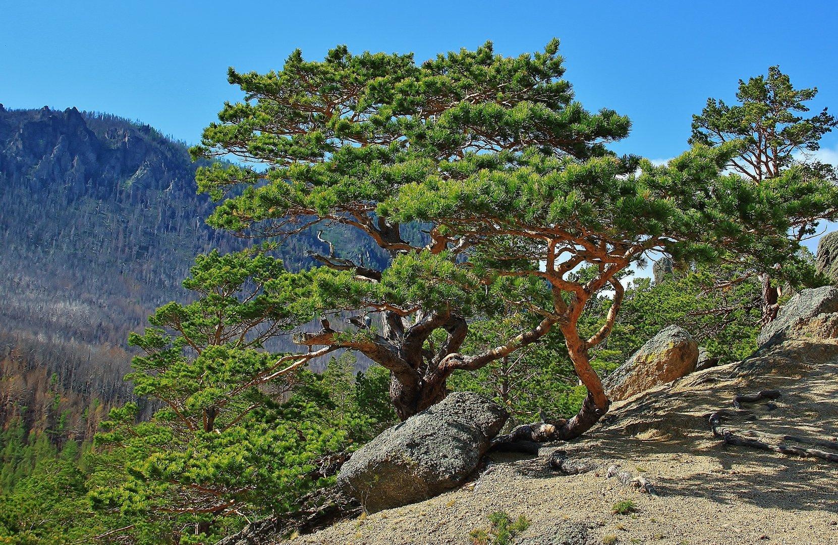Растительный мир Байкала