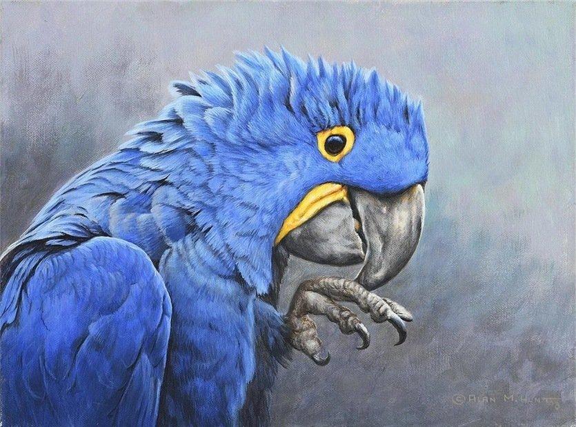 Портрет попугая ара