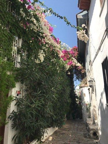 Цветы на улицах Мармариса