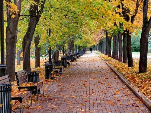 Осенняя аллея с одинокой фигурой