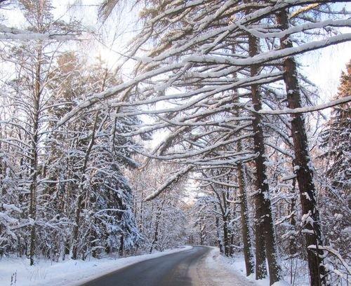 Что зимой и летом одним цветом в 2020 году?