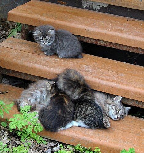 кошка Маруся с котятами