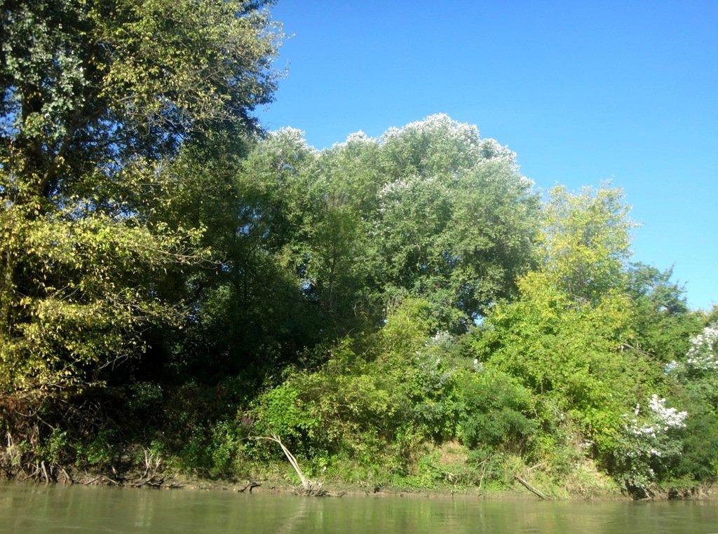 В походе лодочном... август, река Кубань 003 006
