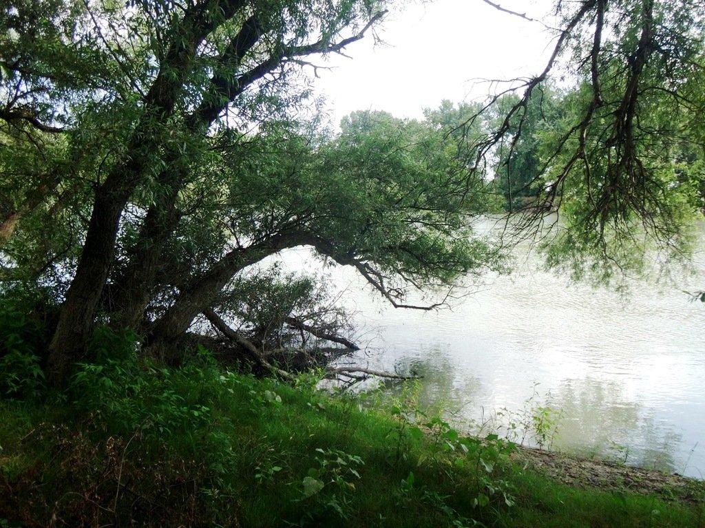 В походе лодочном... август, река Кубань 003 005