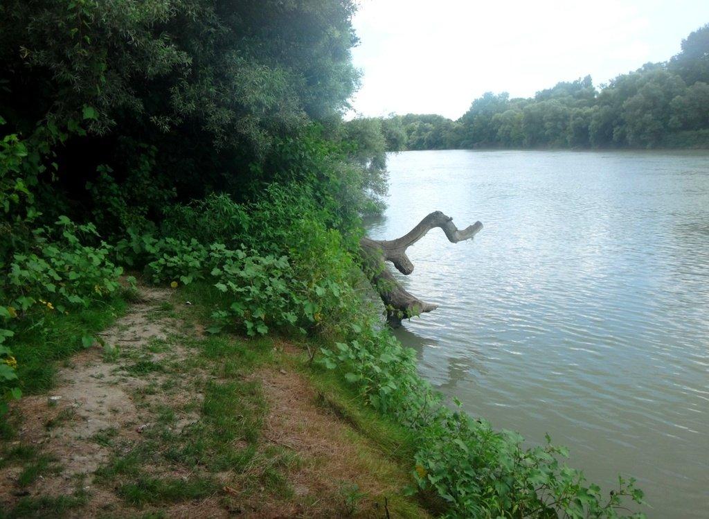 В походе лодочном... август, река Кубань 005 001