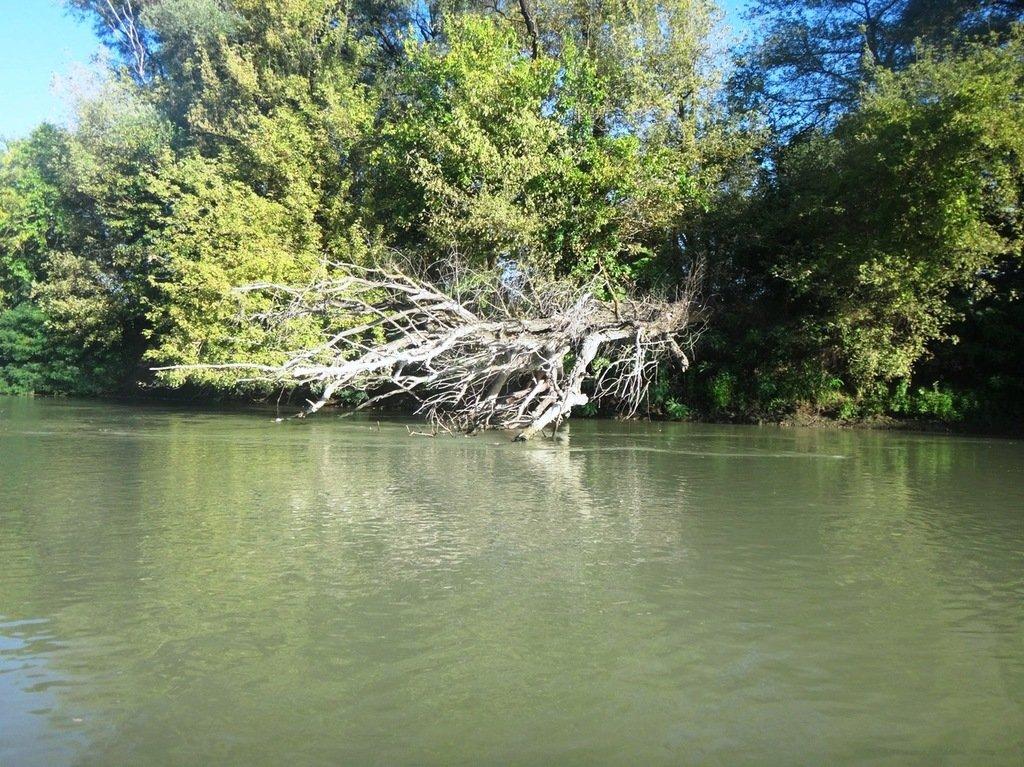 В походе лодочном... август, река Кубань 008 005