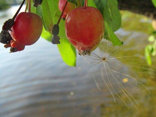 Осень у реки