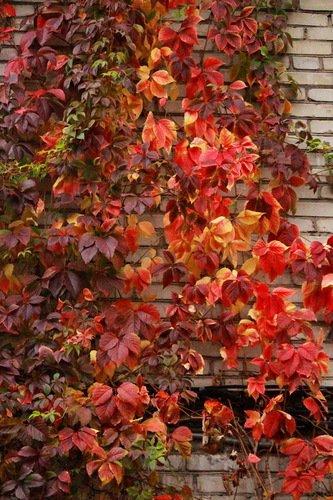 Красные краски осени
