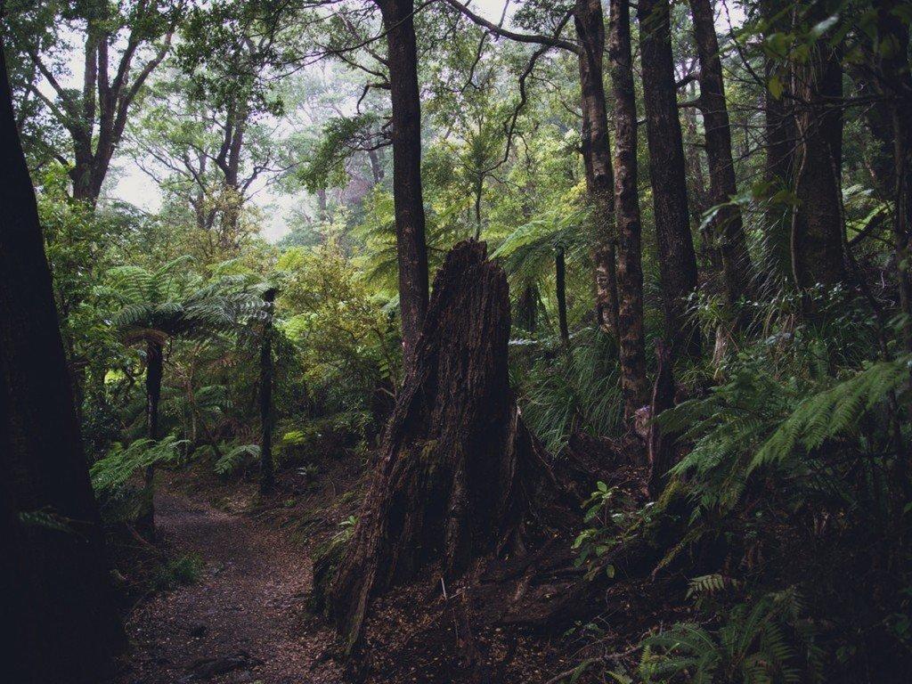 Лес для стаи
