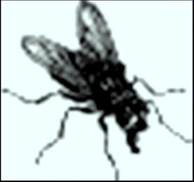 Иллюстрация В. Н. Горяева к пр-ю М.Твена Приключения Тома Сойера (12).