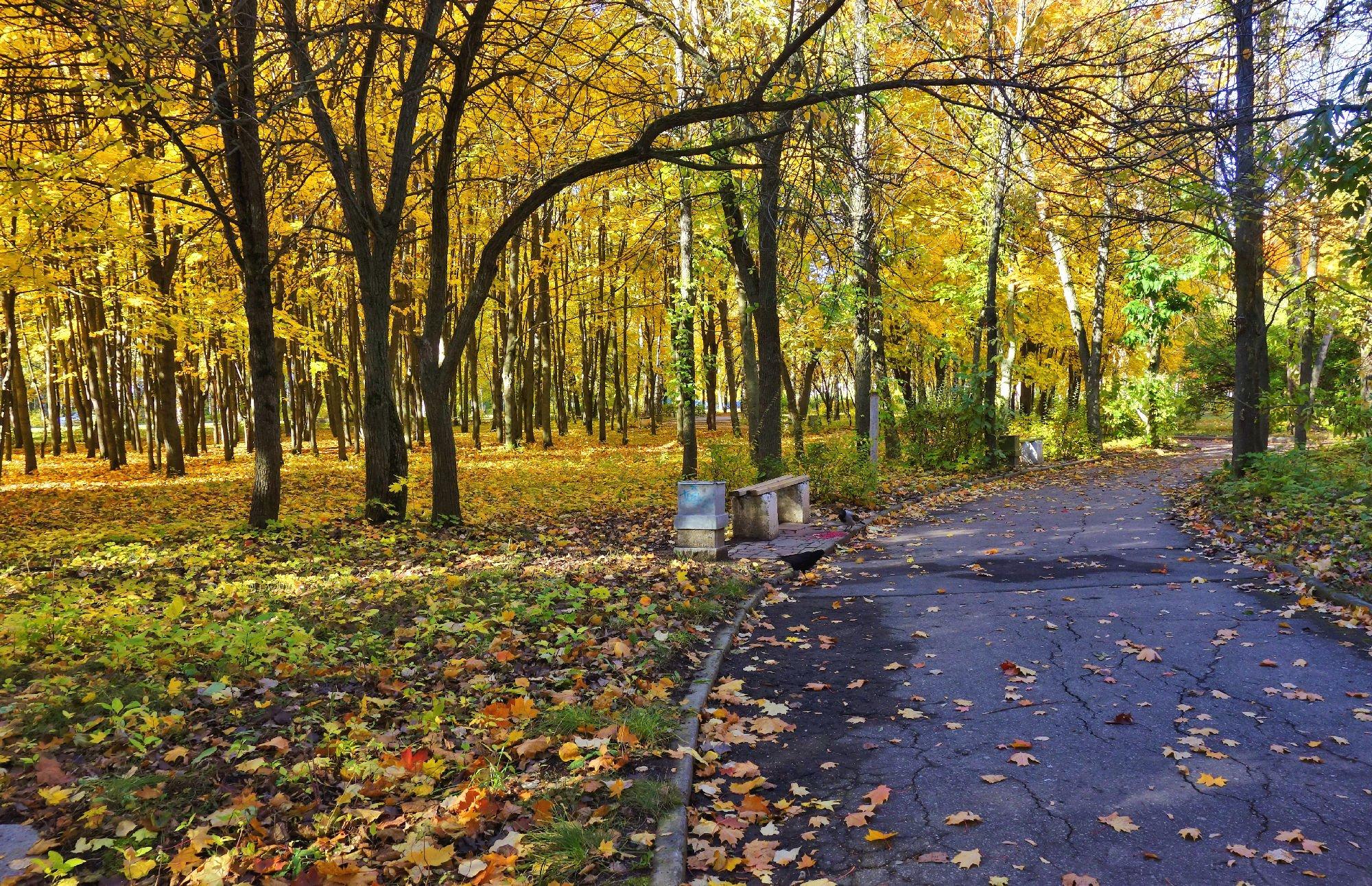 связывали фото осенних прогулок ангарск цвет