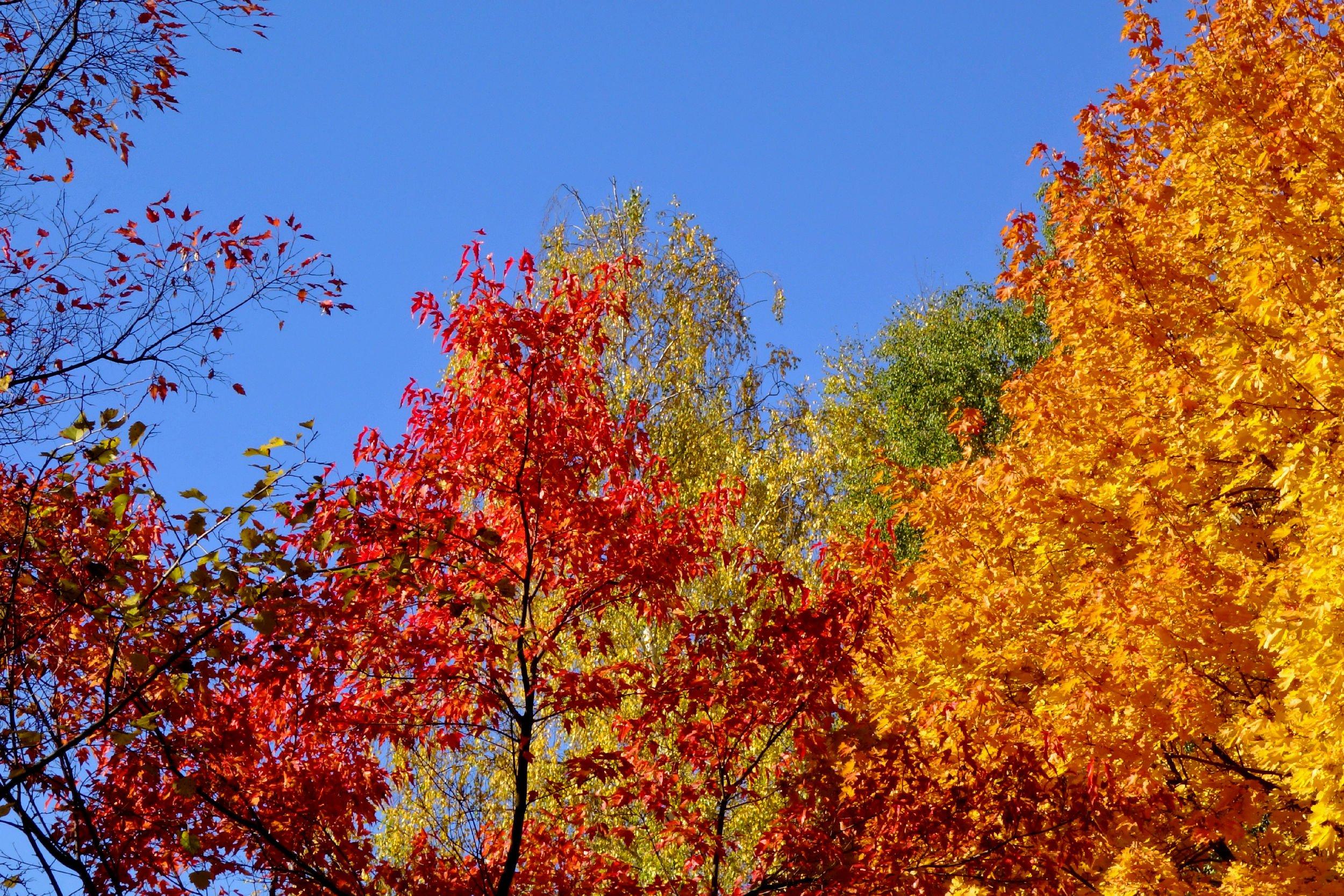 меня деревья с опавшей листвой картинки стала отказываться