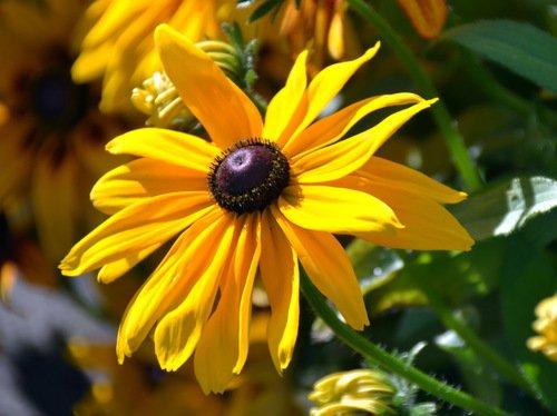 Осенний бренд-желтое