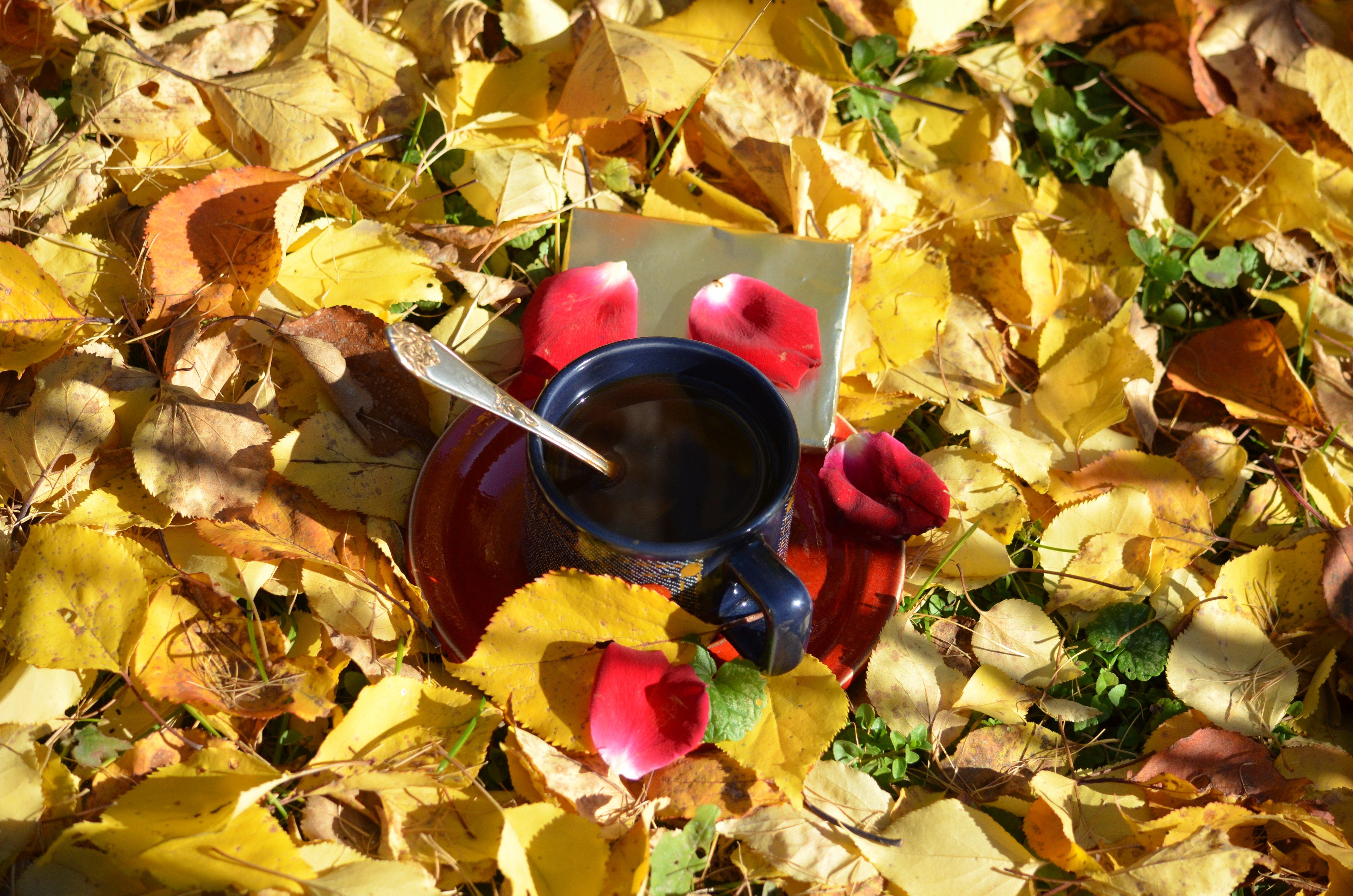 Картинки про, картинки осень и кофе красивые