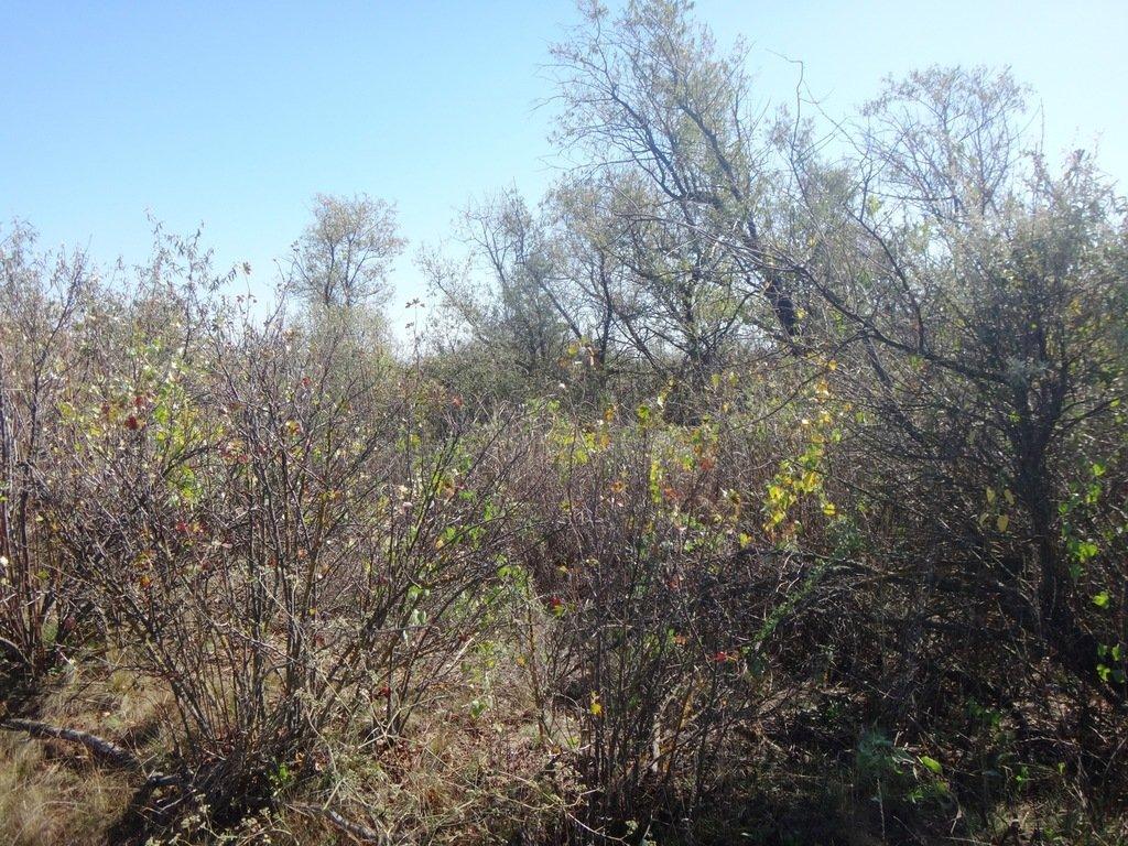 В лесу, на Ясенской косе, Осень...