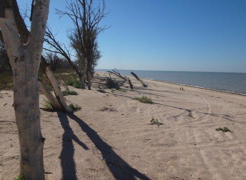 Берег песчаный