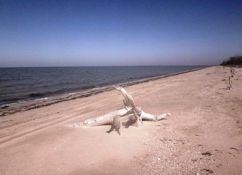 Коряга, у моря