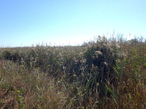Камыши, травы