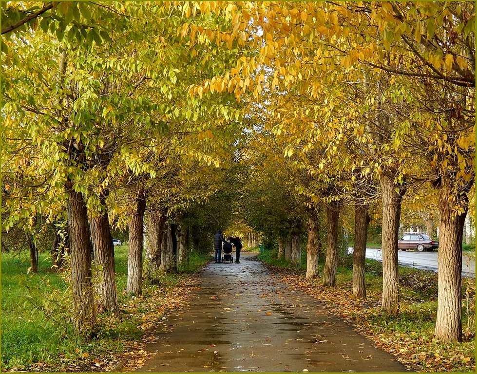 Осенняя прогулка ...