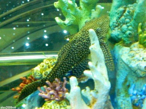 Среди кораллов