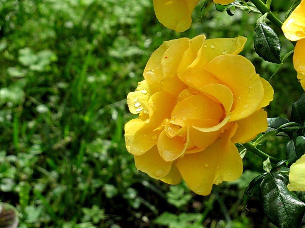 Мокрые желтые