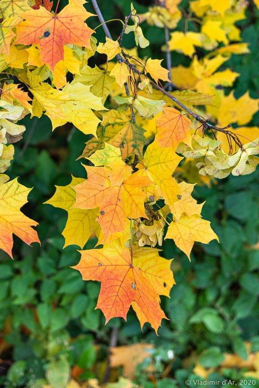 Предзнаменование Золотой Осени
