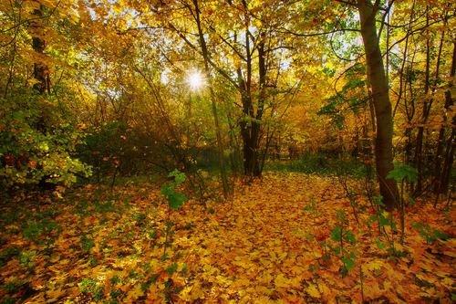 Золото октября