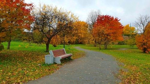 Осенняя скамейка...