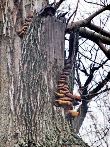 Мартовские грибы