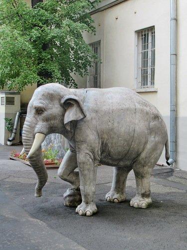 По улицам Москвы слона водили