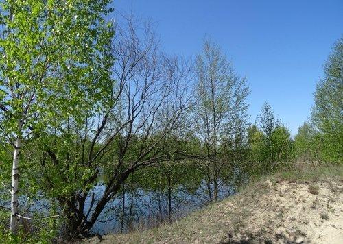 """Результаты конкурса """"Весенний лес"""""""