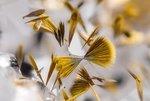 Игольчатые кристаллы гетита (оксид железа) на кварце из шахты Marmoraton. Онтарио, Канада. Фото Michael Bainbridge(...из интернета)