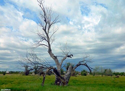 Дерево-иероглиф