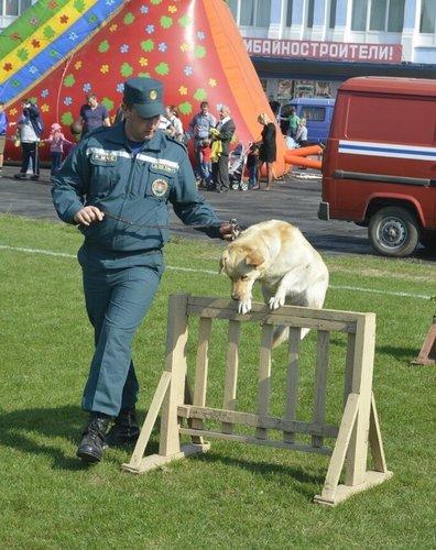 Итоги тематического конкурса «Собака - друг человека»