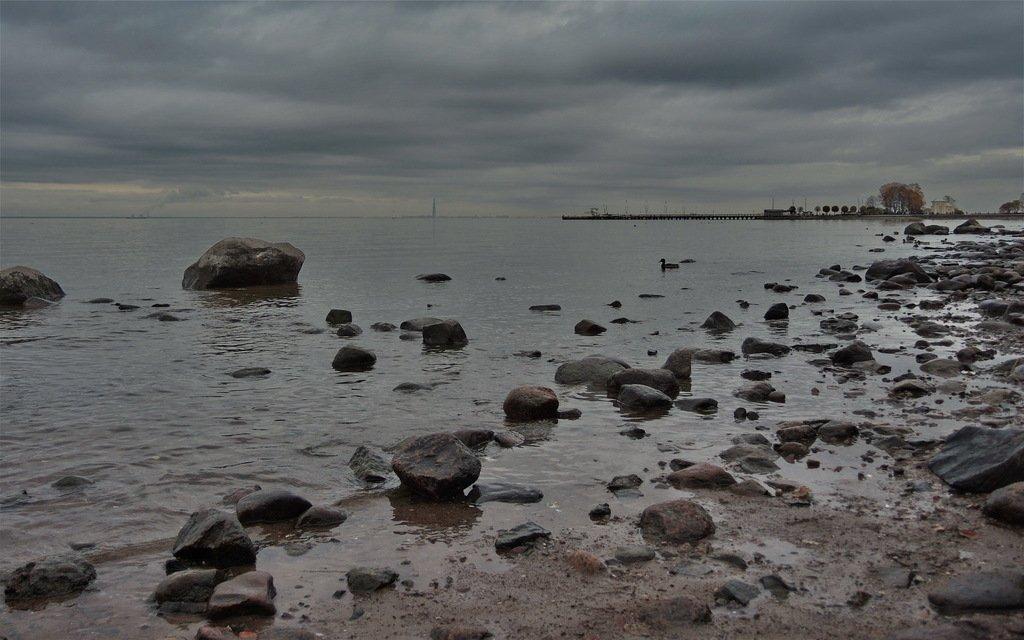 дома указана финский залив фото сегодня точка