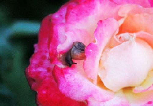 залезла розу объедать