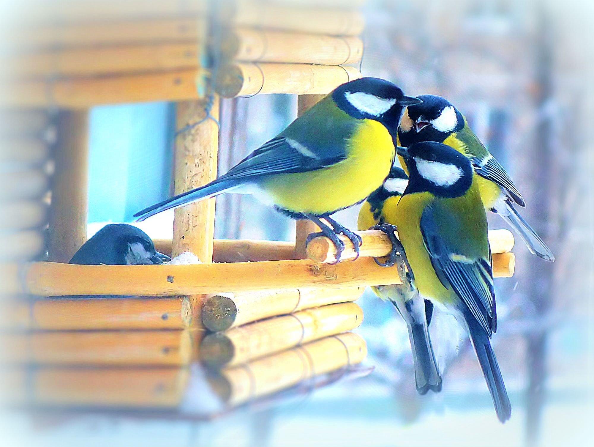 Смотреть фото фотоконкурса птицы на кормушке
