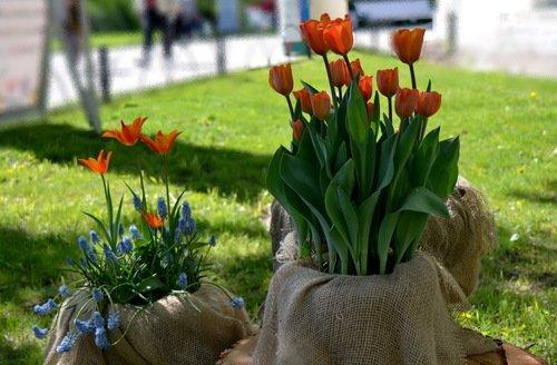 подарки Весне
