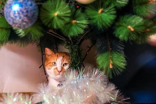 Кот Мостик усердно ёлку наряжал..