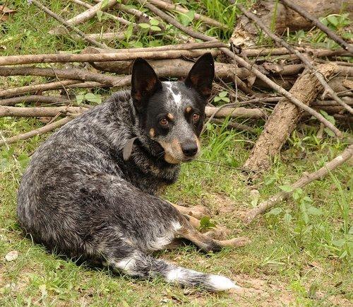 Собака=друг