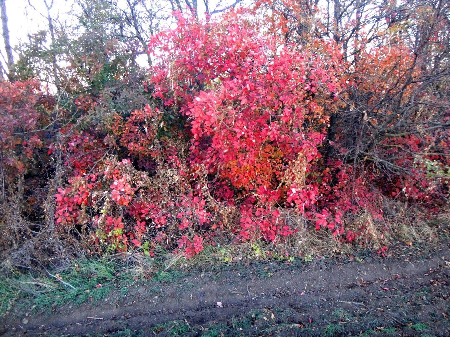 Краски ноября