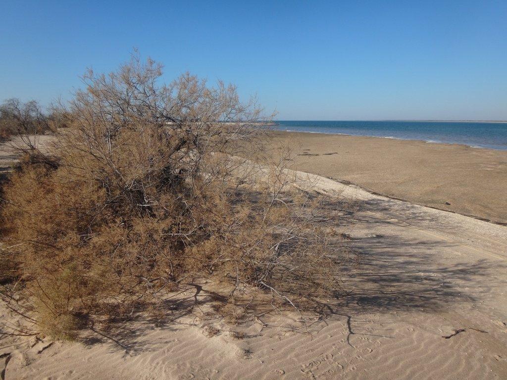 На Азовском побережье, с велосипедом, туризм, 8 ноября, 2018 год, Кубань... 005