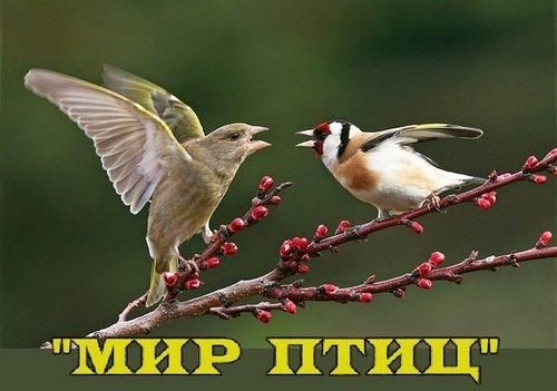 """Итоги конкурса """"МИР ПТИЦ"""""""