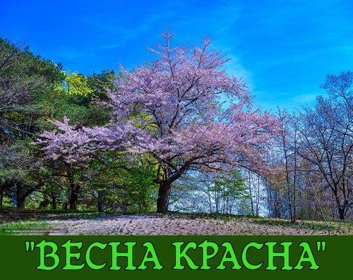 "Итоги конкурса ""ВЕСНА КРАСНА"""